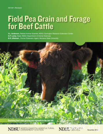 Field Pea Grain and Forage for Beef Cattle (AS1301)